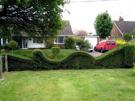Evergreen hedge cutter 23 fresh design ideas for gardeners