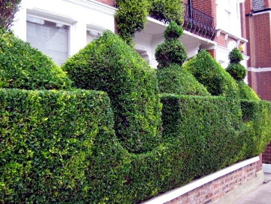 Evergreen hedge cutter 23 fresh design ideas for gardeners