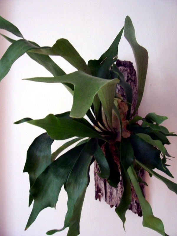 Plants with unusual flowers and emissions of a beautiful interior garden