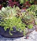 succulent-plants-with-pots-of-original-flowers-as-decoration-in-the-house-0-121