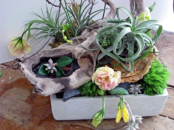 Succulent plants with pots of original flowers as decoration in the house