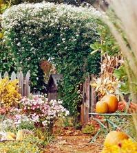 the-garden-in-autumn-tips-and-ideas-for-your-fall-garden-0-146