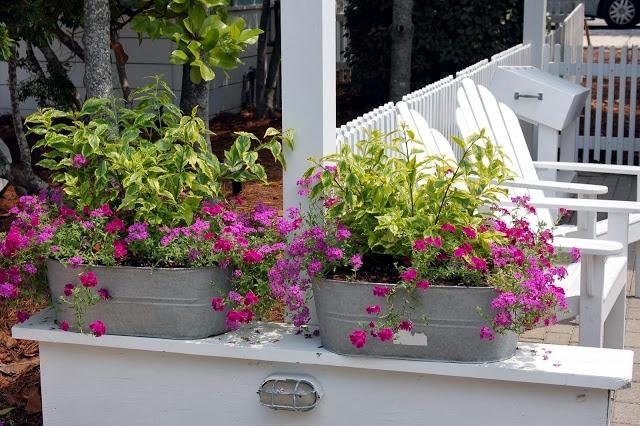 Balcony Plant Plant Breeding Balcony
