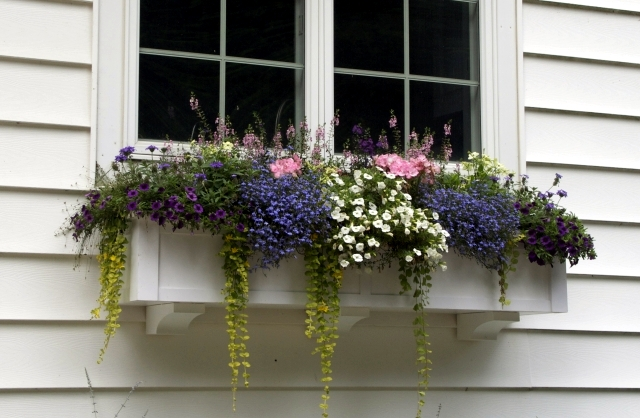 Plant Breeding balcony - beautiful flowers combined in pairs