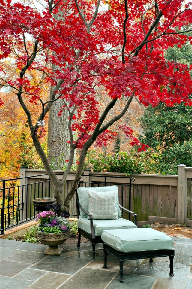 Garden Design Ideas For Small Gardens   Trees That Transmit Light And  Provide Shade