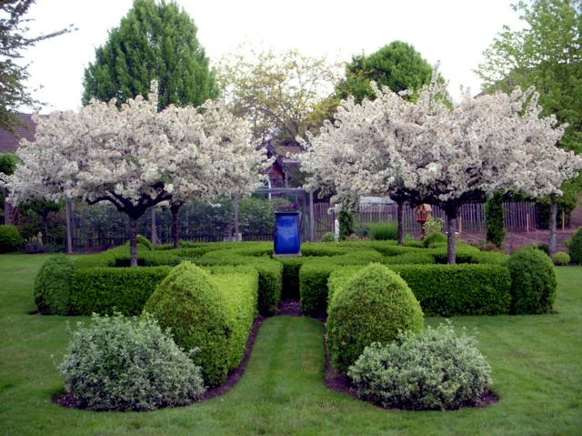 Garden design ideas - the best trees for small gardens ...