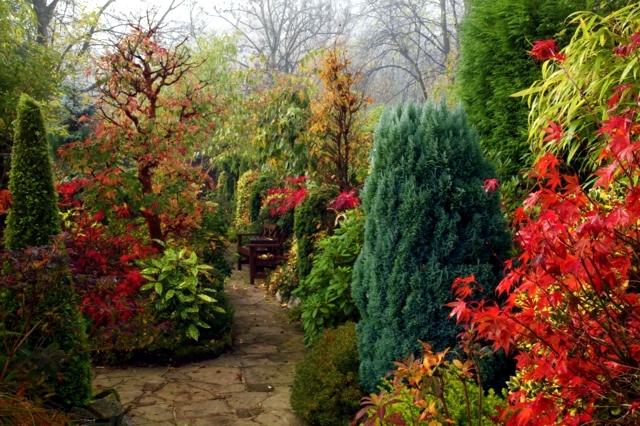 Garden design ideas - the 10 best trees for small gardens