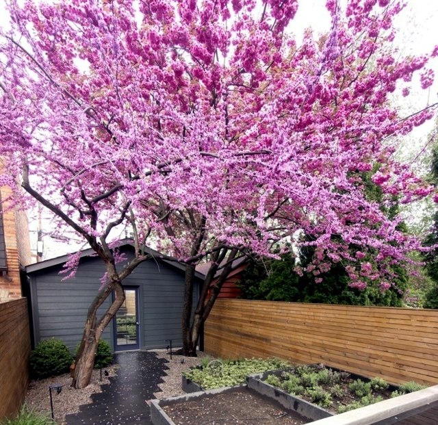 Garden design ideas - the 10 best trees for small gardens