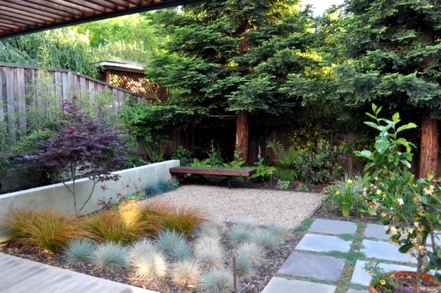 Garden design ideas – the 10 best trees for small gardens ...
