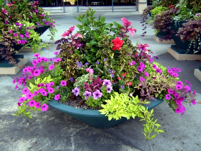 A variety of ideas for flower pots bring a breath of fresh spring