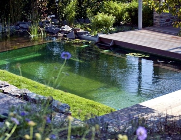 Swimming pond build – benefits of natural pool in the garden ...