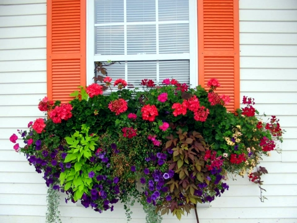 15 were central window decoration and gardening ideas - Flower box ideas for summer ...