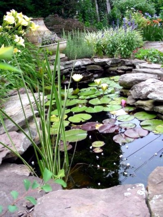 How to build a garden pond low maintenance itself in 7 for Backyard pond maintenance