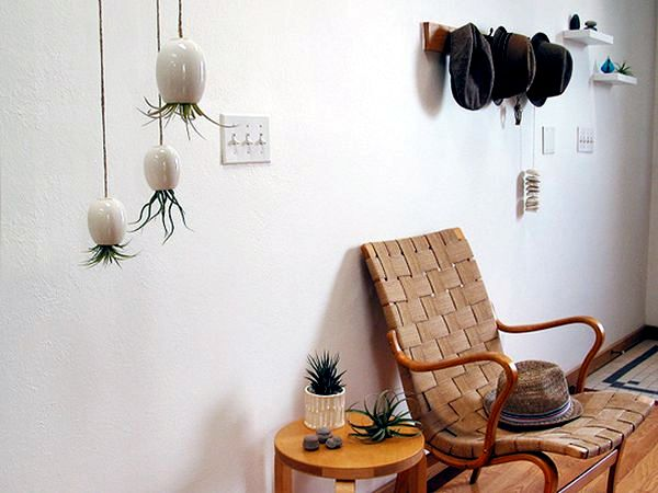 Camera design with green plants hanging planters and pots