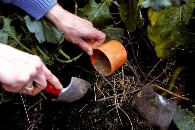 Fertilizer needed for the garden - when, how and how?