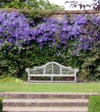 clematis-in-the-garden-planting-maintenance-and-hibernation-clematis-0-273