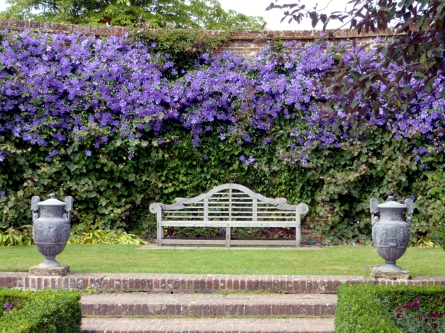Clematis In The Garden Planting Maintenance And
