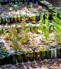 use-empty-wine-bottles-in-the-garden-again-20-clever-ideas-0-277