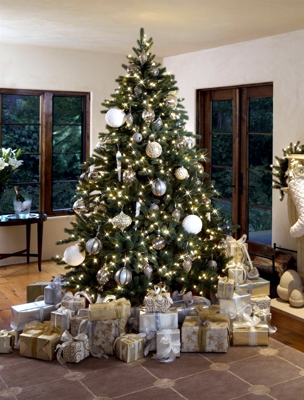 Choose The Perfect Christmas Tree Fresh Green Pine Tips Interior