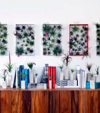 vertical-mini-indoor-gardens-uprooted-tillandsia-0-287