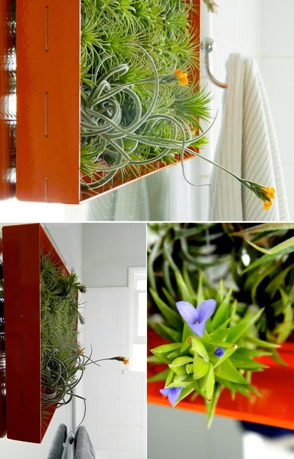 Vertical mini indoor gardens uprooted Tillandsia