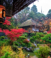 garden-design-in-japanese-style-and-countries-including-plants-0-306