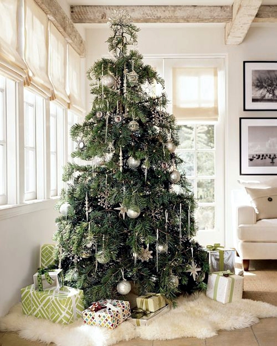 Buy Christmas Trees - helpful tips on how to choose the Christmas tree