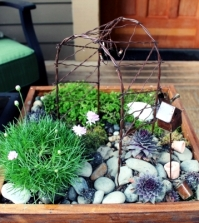 creating-a-miniature-garden-on-the-coffee-table-is-eve-0-320