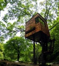 tree-house-building-in-the-forest-amazing-tree-houses-by-takashi-kobayashi-0-320