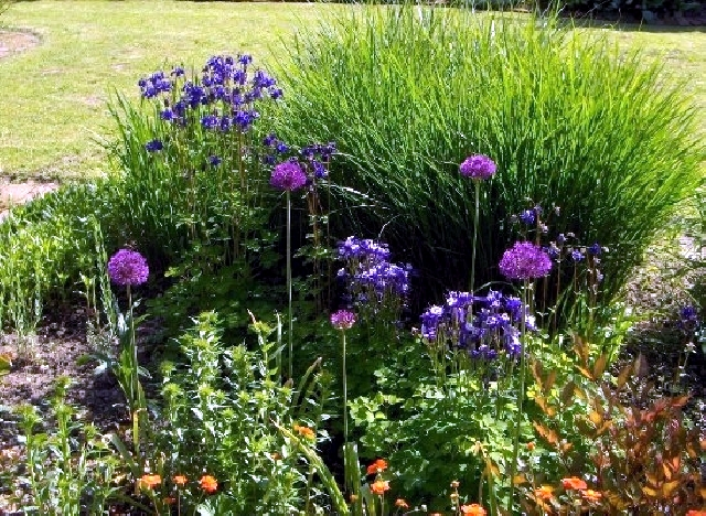 Beautiful flowers for the garden provide an explosion of color