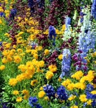creating-gardens-in-the-spring-and-summer-flowers-and-plants-0-338