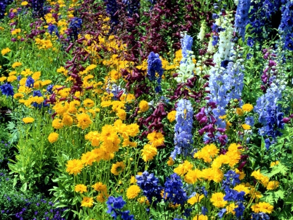 Creating Gardens In The Spring And Summer Flowers And