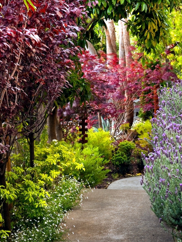 planning and design of garden planting flowers shrubs and trees - Garden Design Trees