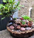 create-miniature-gardens-in-pots-on-the-balcony-quickstart-guide-0-358