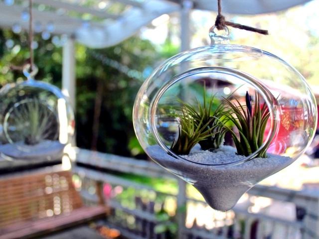 Rootless air plants in a terrarium - Tillandsia properly maintain