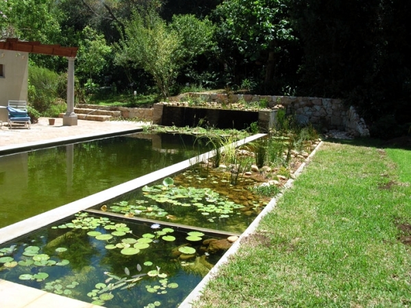 Diy by pond with a natural self cleaning process Environmentally sustainable swimming pools