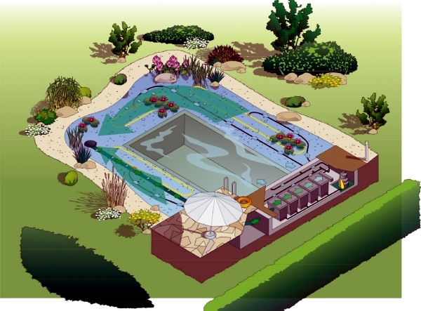 DIY by swimming pond with a natural self-cleaning process