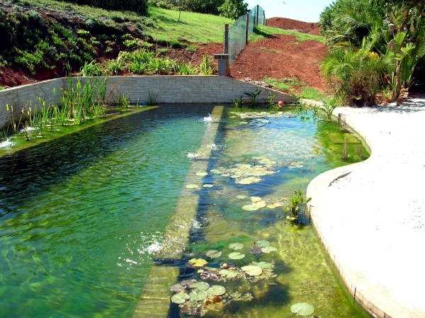 Diy by pond with a natural self cleaning process for Swimming pool koi pond conversion