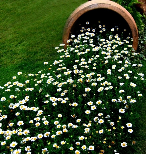 Creative Garden Ideas - attractive planting flowers and creating illusions