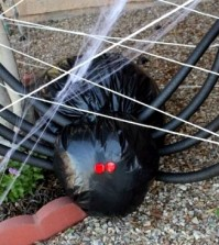 two-decorating-ideas-for-halloween-crafts-the-spider-and-the-giant-spider-0-412