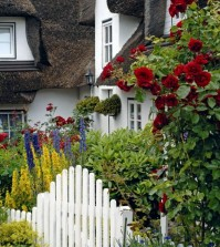 cottage-with-red-roses-in-the-front-yard-0-414