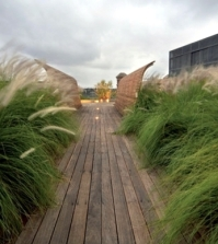 perennials-in-the-garden-design-ideas-with-pampas-grass-0-419