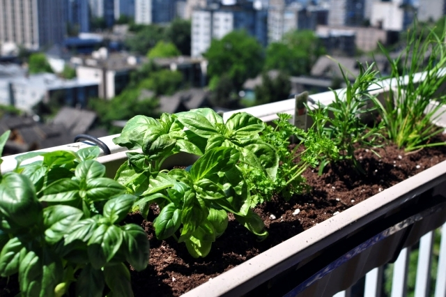 Grass on the balcony - How to create an herb garden?