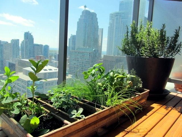 Grass on the balcony How to create an herb garden Interior