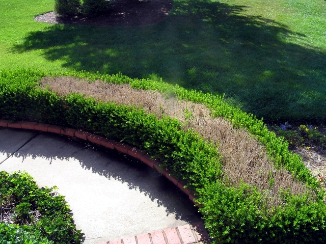 Why boxwood plants - Provides a green note on gray winter