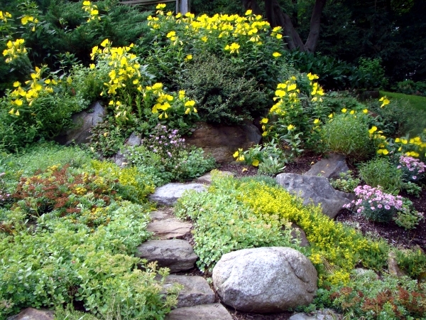Creating a rock garden where plants are best placed?