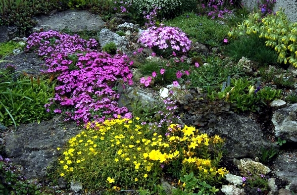 garden design: garden design with rock garden plants for the