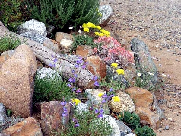 Creating a rock garden where plants are best placed for Creating a rock garden