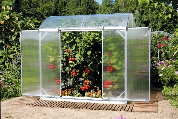 Growing Plants In A Greenhouse Tips For Gardening Interior