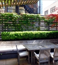 balcony-vertical-greening-and-effective-and-inexpensive-detection-0-438
